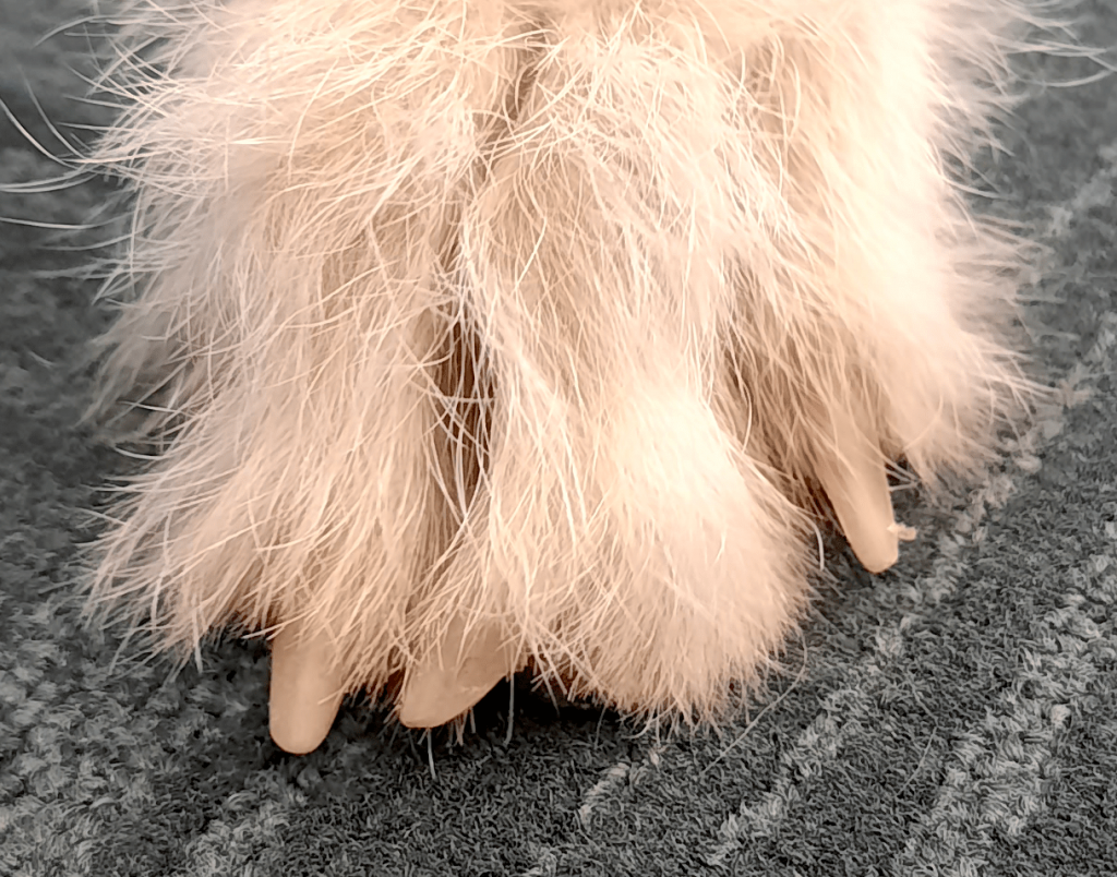 Dog's Paw and Nails