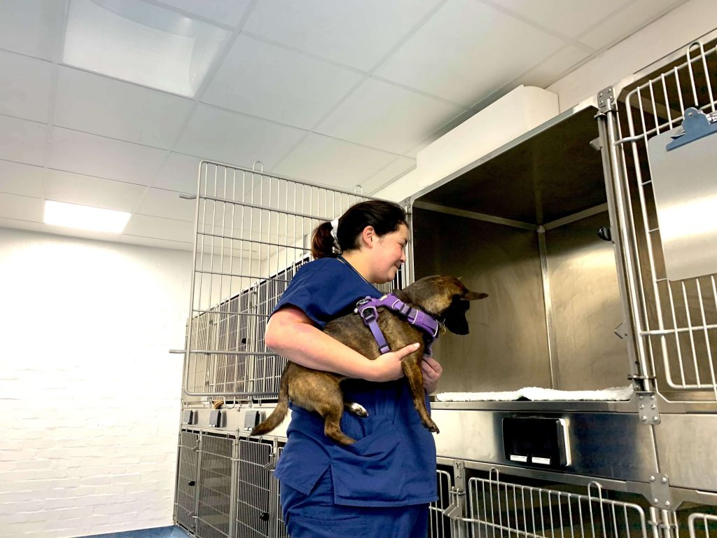 inpatient care at birkenhead vets