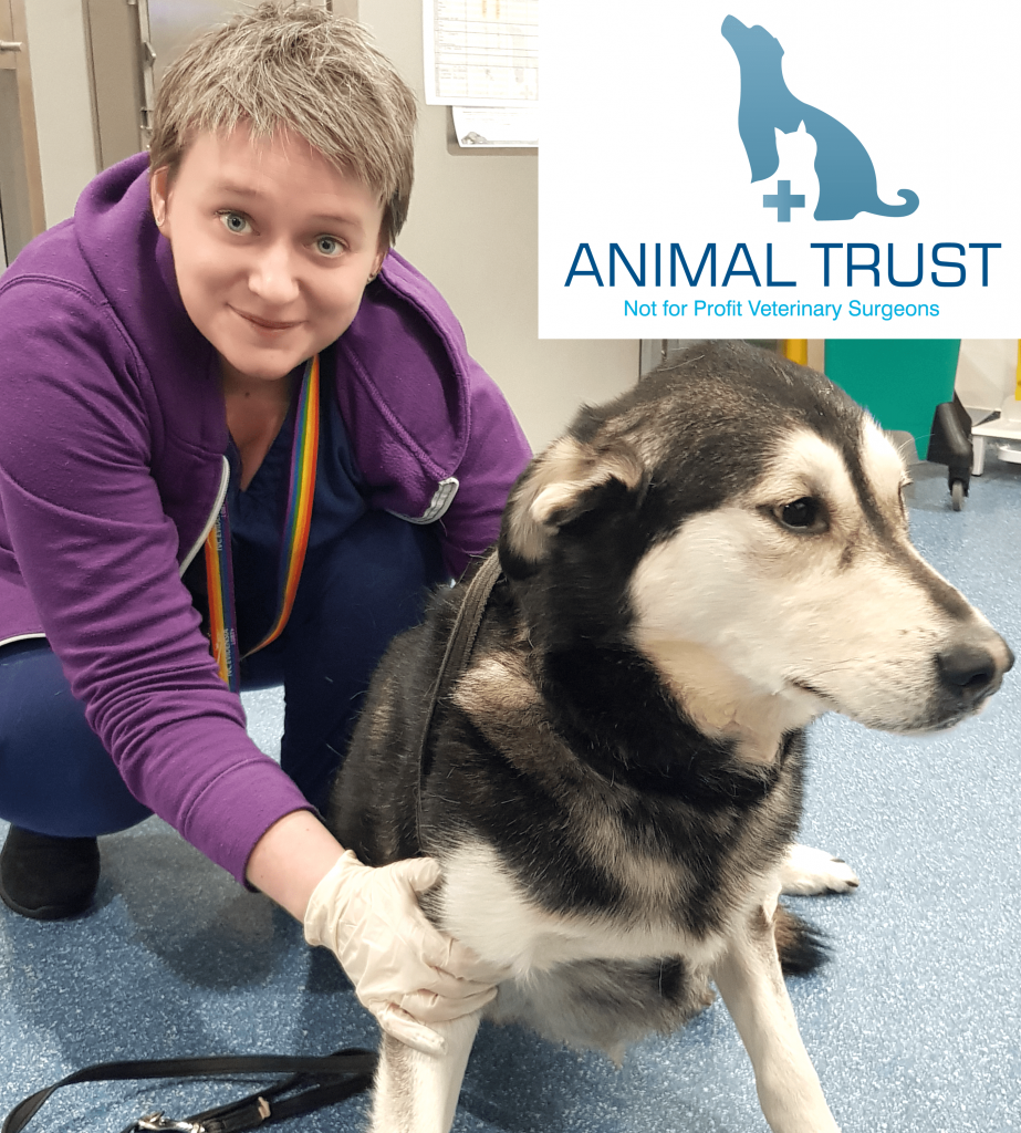 Dog Treated at Animal Trust Shrewsbury Vets