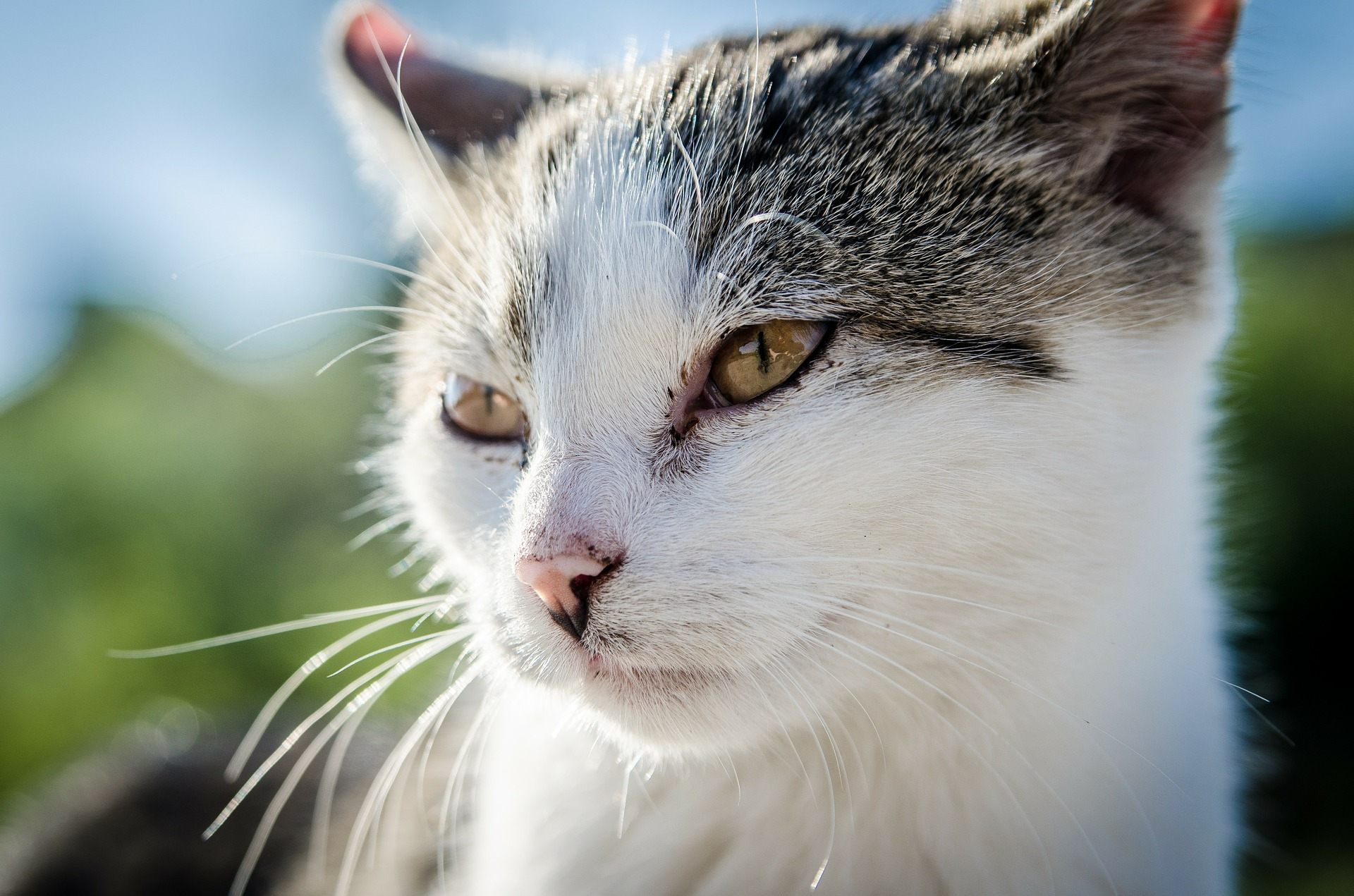 Does my Cat need a vaccination?
