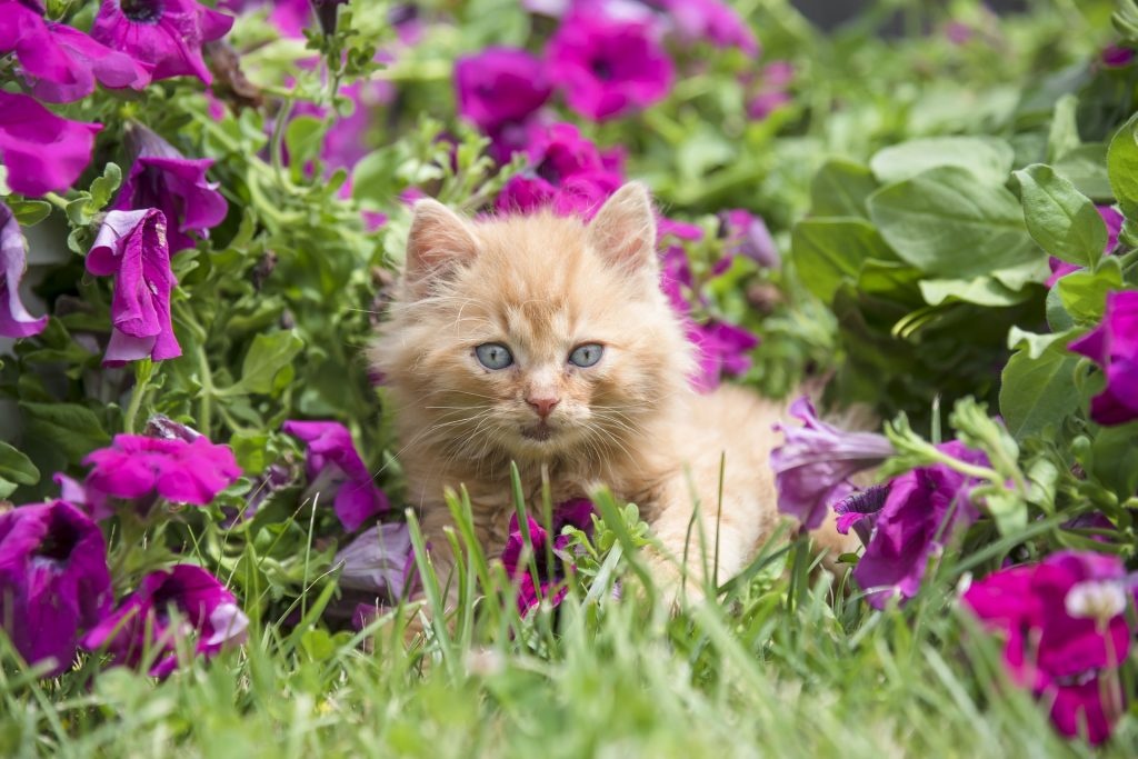 Kitten Friendly Garden