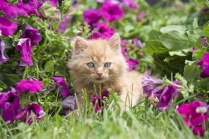 Kitten Friendly Garden