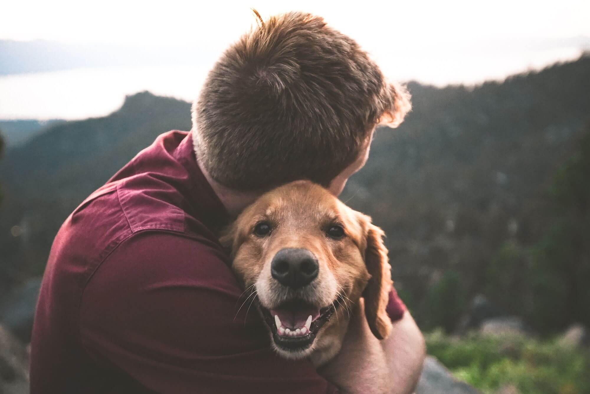 Vet Treatment Prices Offers Animal