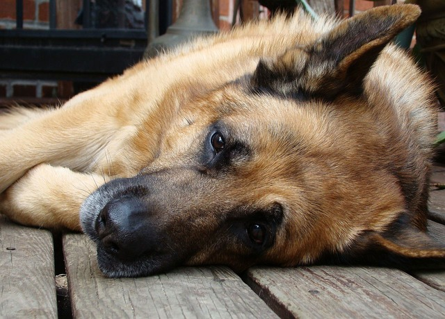 Can dogs catch a cold?